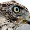 Интеллект птиц
