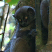 Мадагаскар – удивительный мир дикой природы
