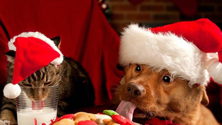 Новогодний стол для домашних питомцев: кошки и собаки.