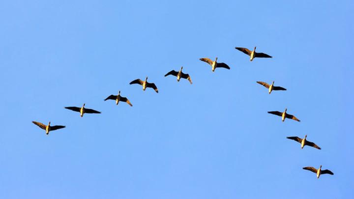 Институт гражданской обороны: миграция птиц может привести к авиакатастрофам