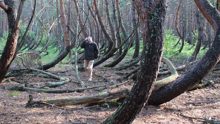 """Экотропу """"Танцующий лес"""" закрыли на реконструкцию"""