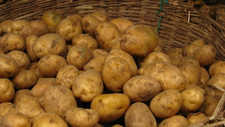 В России предложили продавать картофель эконом-класса