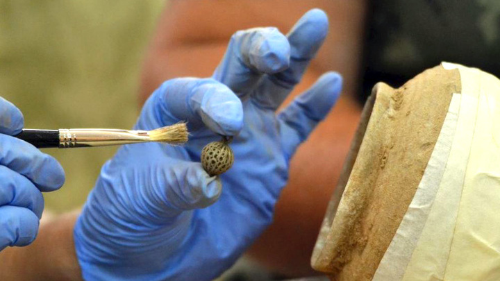 Один из артефактов клада из Калиакры. Фото: National History Museum