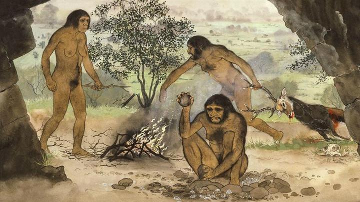 Простые каменные орудия, вероятно, позволили ранним людям есть мясо и корнеплоды