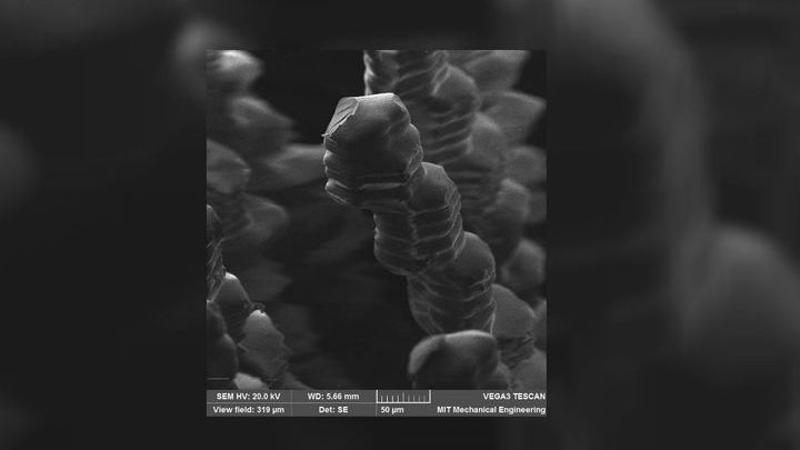 Микрофотография напечатанного волоса. Толщина структур может достигать 50 микрометров.