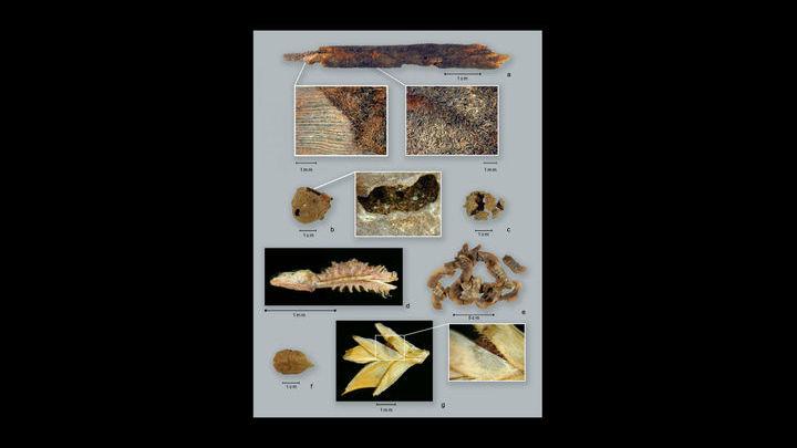 Фрагменты гончарных изделий, к которым древние люди готовили растения. Изделиям примерно 10 тысяч лет.