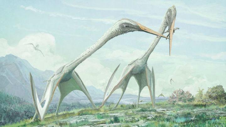 Находке примерно 70 миллионов лет.