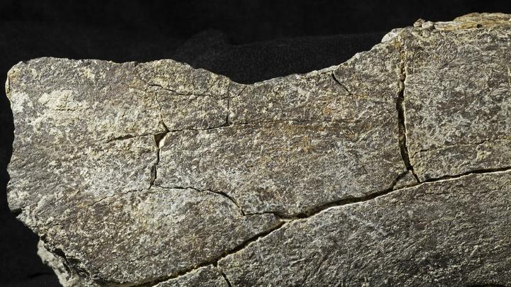 Бедренная кость мастодонта с повреждениями, нанесёнными 130 тысяч лет назад, вероятно, первыми жителями Америки.