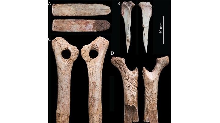 """Учёные полагают, что отметины на костях √ часть мнемонической техники, чего-то вроде """"узелков на память""""."""