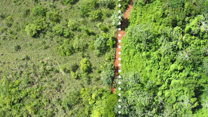 Справа показана часть обработанной апельсиновыми корками земли, слева √ необработанная территория.