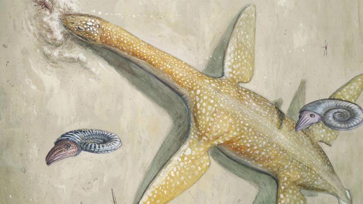 Плезиозавры были весьма успешными хищниками, королями мезозойских морей.
