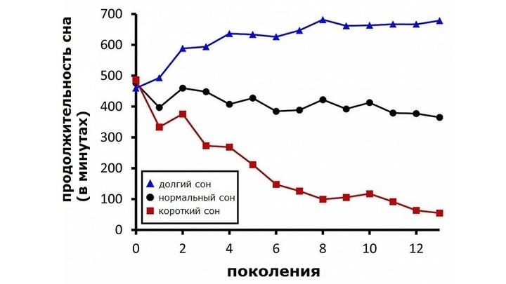 График продолжительности сна 13 поколений дрозофил, использованных в эксперименте.