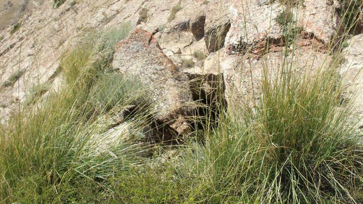 Алайская долина никогда раньше не исследовалась археологами.