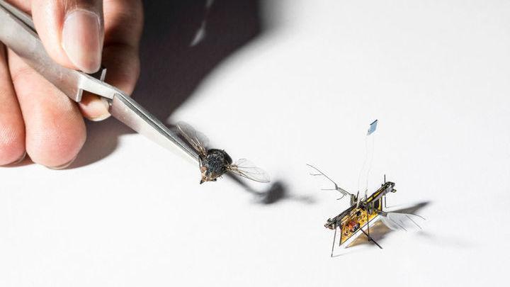 По размеру робот сопоставим с живым насекомым.