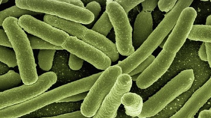 Некоторые сахарозаменители повреждают ДНК кишечной палочки, другие же изменяют структурные белки бактериальных клеток.