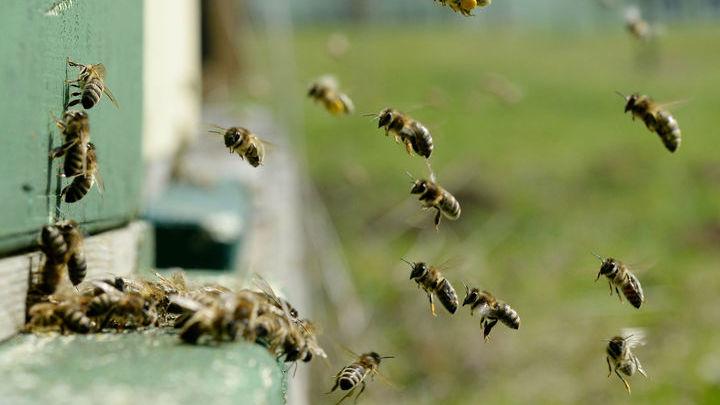 Пчёлы не впервые удивляют биологов.