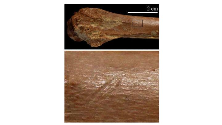 Следы порезов, которые появляются при разделывании мяса.