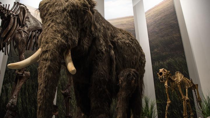 Как выяснилось, мамонтов и неандертальцев защищали от холода одни и те же мутации.