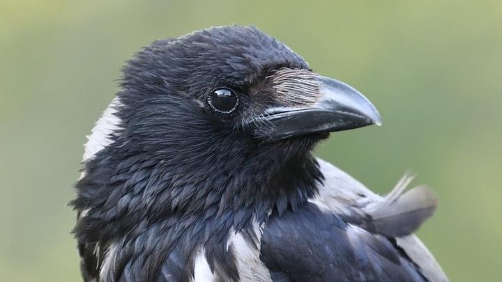Несмотря на морозы птицы начали вить гнёзда в Москве