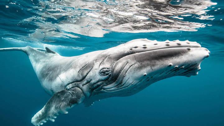 В США мужчина выжил после попадания в пасть кита