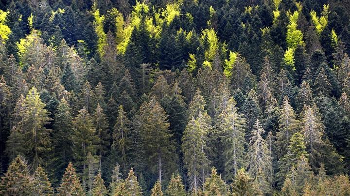RFP Group предложила приватизировать часть леса в России