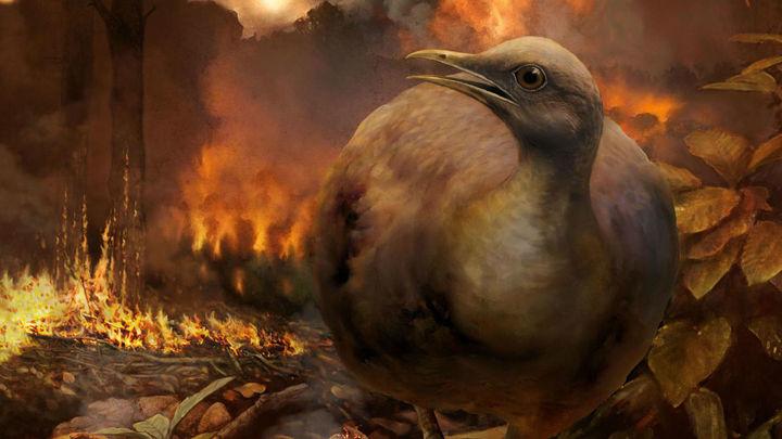 """Что помогло предкам современных птиц пережить астероидный """"апокалипсис""""?"""