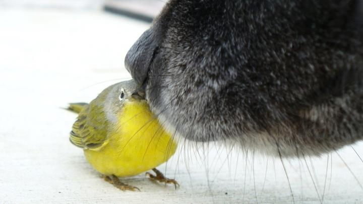 Собаки формируют чёткое представление о цели, которую ищут по запаху