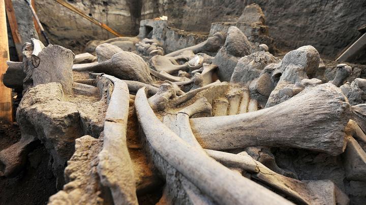 Юный археолог нашел на английском пляже зуб мамонта из ледникового периода