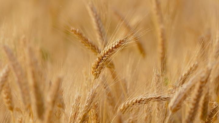 На замену пестицидам: новая РНК-вакцина защитит растения от патогенов
