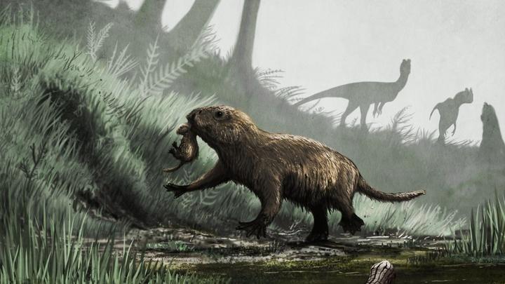 Тёмное прошлое млекопитающих: как динозавры изменили ДНК наших предков