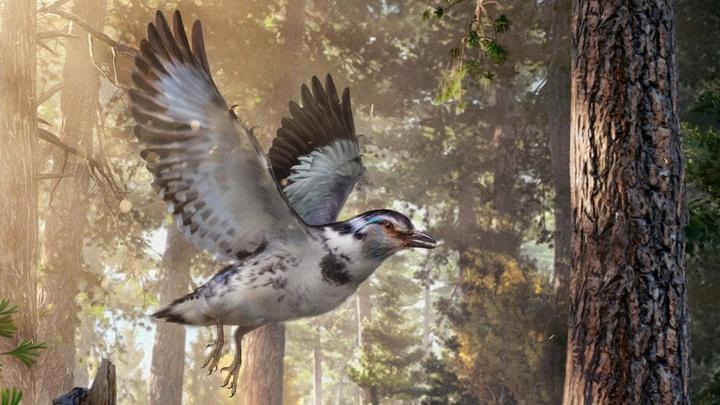 """""""Эксперимент эволюции"""": в Китае найдены останки необычной птицы возрастом 127 миллионов лет"""