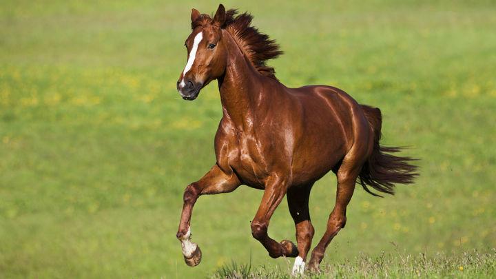 Стоит лошадям переехать в лучшие условия для жизни, как они начинают фыркать намного чаще.