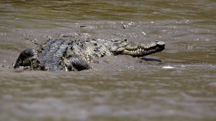Четырехметровый крокодил укусил туриста на севере Австралии