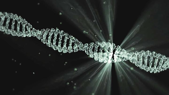 Учёные использовали технологию, которая позволяет максимально точно контролировать место введения здоровой копии гена.