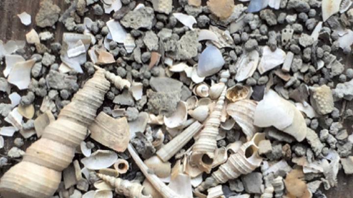 Все живы: как палеонтологи могут получать ложные картины массовых вымираний