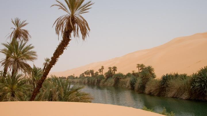 Климатологи придумали, как озеленить Сахару и спастись от глобального потепления