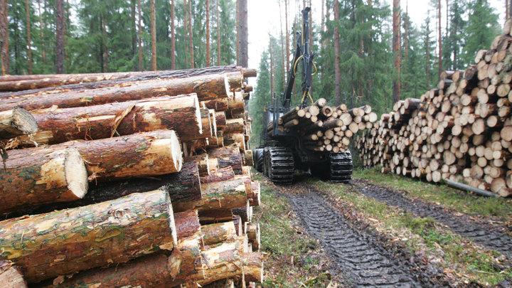 Путин призвал проработать сбыт конфискованной древесины у нелегальных лесорубов
