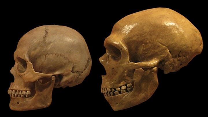 Роман длиною в 30 тысяч лет: неандертальцы скрещивались с сапиенсами намного чаще, чем считалось