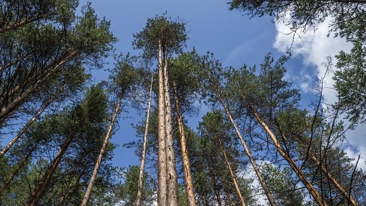 Швейцарцы построят крупнейший в России деревоперерабатывающий завод