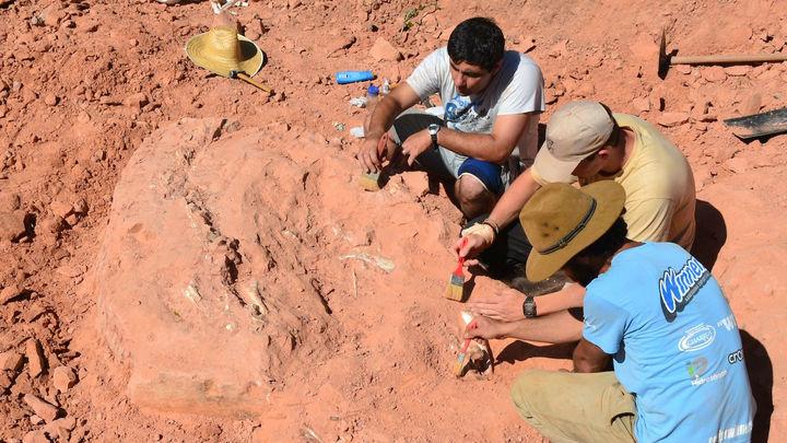 Телефонный звонок мамы палеонтолога помог обнаружить ценные останки длинношеих динозавров