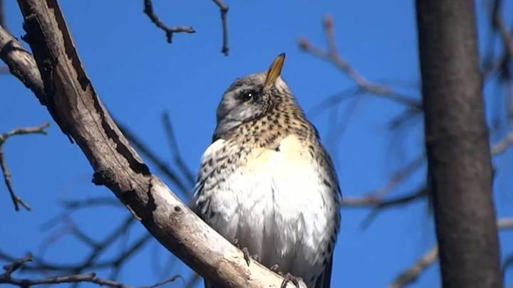 Птицы начали вить гнёзда в Москве