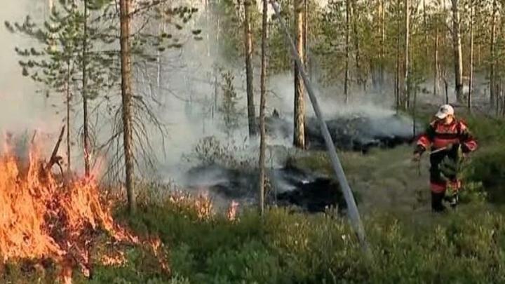 Площадь действующих в российских регионах пожаров составляет почти 60,5 тыс. га