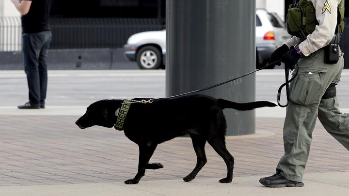 Из-за марихуаны собак-полицейских досрочно отправили на пенсию