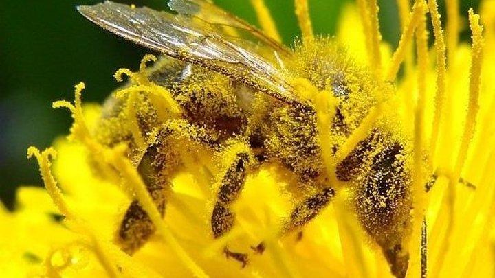 Эксперт отреагировал на новости о коронавирусе и пыльце