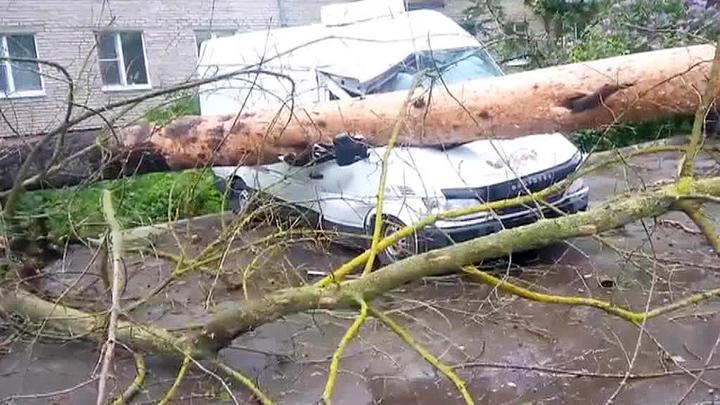 Деревья уже падают: в Москве гроза с дождем и сильный ветер