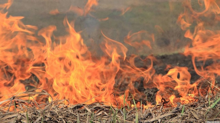 В Новгородской области за выходные произошло 180 возгораний травы