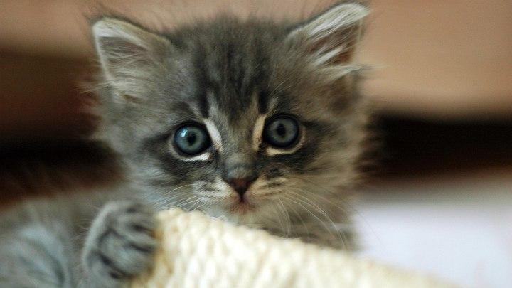 Калужский зоозащитник убил соседа в отместку за котенка