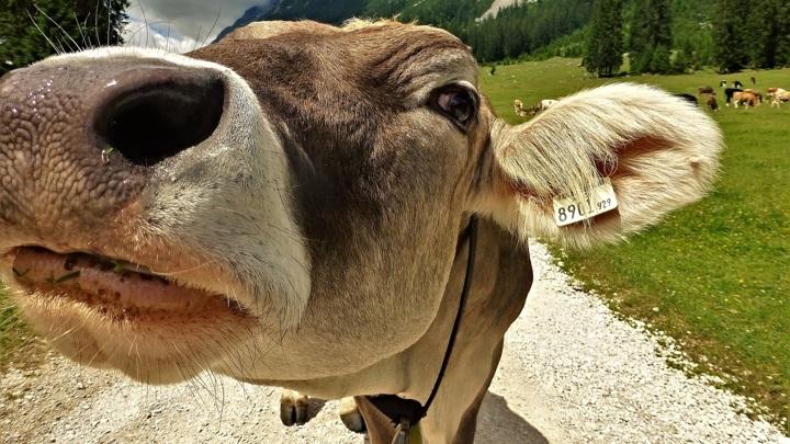 Более 250 миллионов рублей получат тульские животноводы