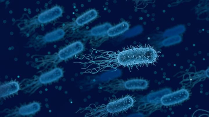 С каждым годом супербактерии превращаются во всё более серьёзную проблему.