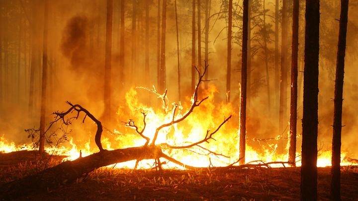 Тысячи гектаров земли и леса горят в России